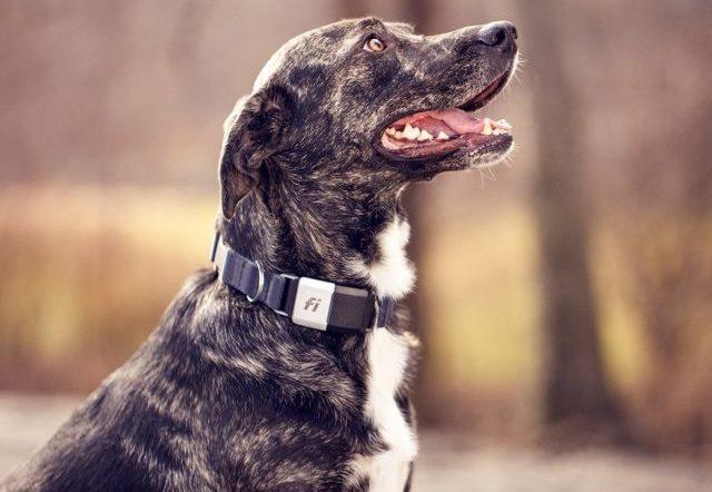 Finding Good Dog Breeds